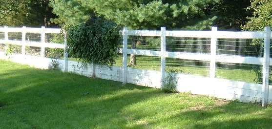 Invisible Dog Fence